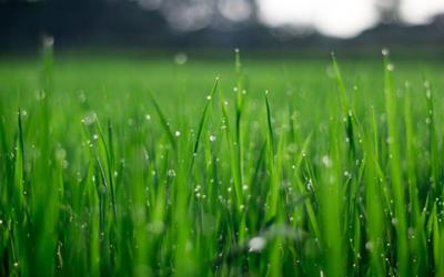Top tips to maintain your garden for Spring